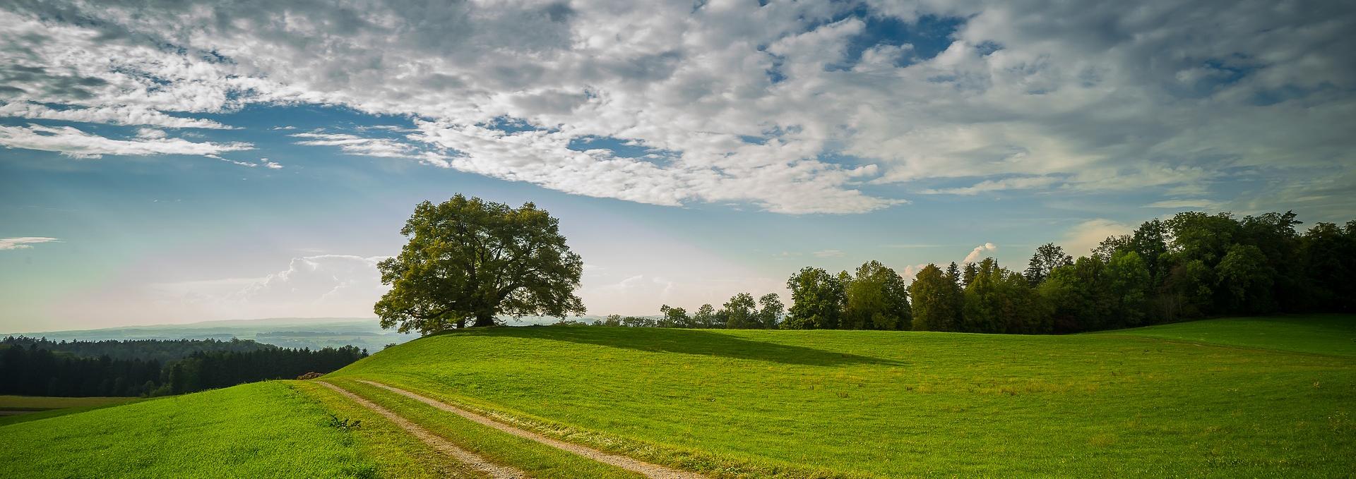 Homepage Steinbach Strategien-Nachhaltigkeitsberatung in Hamburg